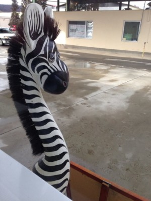 Zebra e la post. Și dacă tot e post, Zebra are mîncare de post...