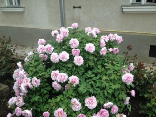 Flori, într-o curte